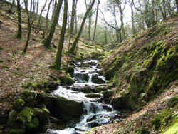 Microhydro flow of river hydropower in Exmoor