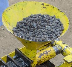 Press for extracting oil from jatropha seeds