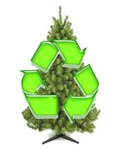 christmas tree recycling - Christmas Tree Removal