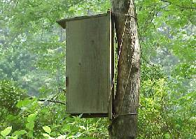 Wildlife Nesting Box in the Woods