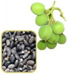What is Jatropha